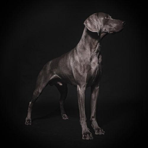 hunde portrait fotografie kaelin meilen